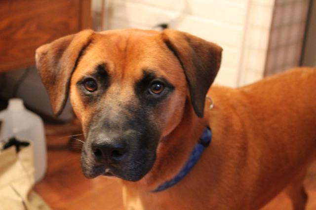 pup py portrait
