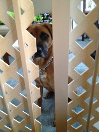puppy prison
