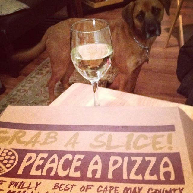 pizza and pup