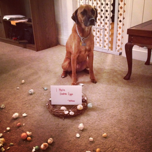 Sign says: I hate Easter eggs. That wreath was hanging above our couch - the one that W's prohibited from touching.