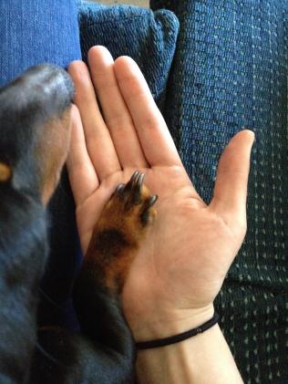tiny paw